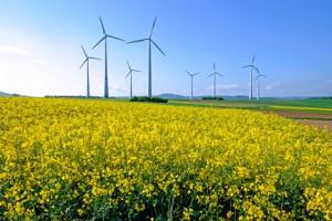 Windkraftanlagen für Ökostrom mit einem Rapsfeld im Vordergrund